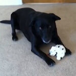 sammythesingingdog-featured