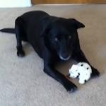 sammythesingingdog-featured