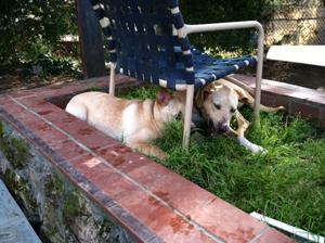 Dog Kennel Santa Cruz